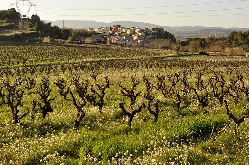 vi blanc 3 macabeus
