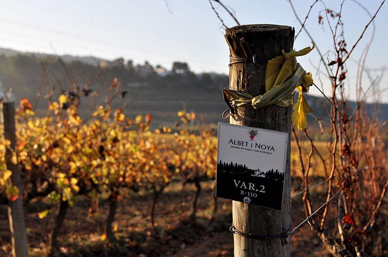 vi blanc MArina Rion